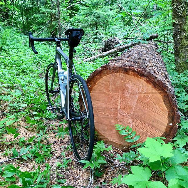 I got a proper road bike to ride proper overgrown trails