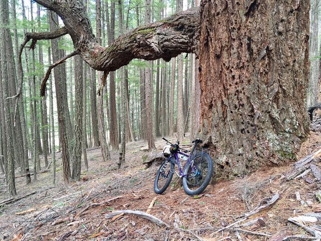 If I don't come back all tussled up and with a picture of my bike leaned on a big old tree then I don't even know what I was doing out there