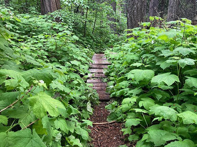 Deep woods tralala